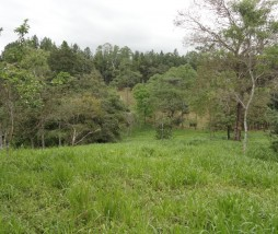 bosques extremeños